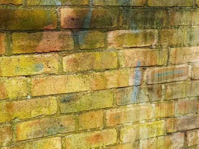 Graffiti, Moss, Algae stained wall